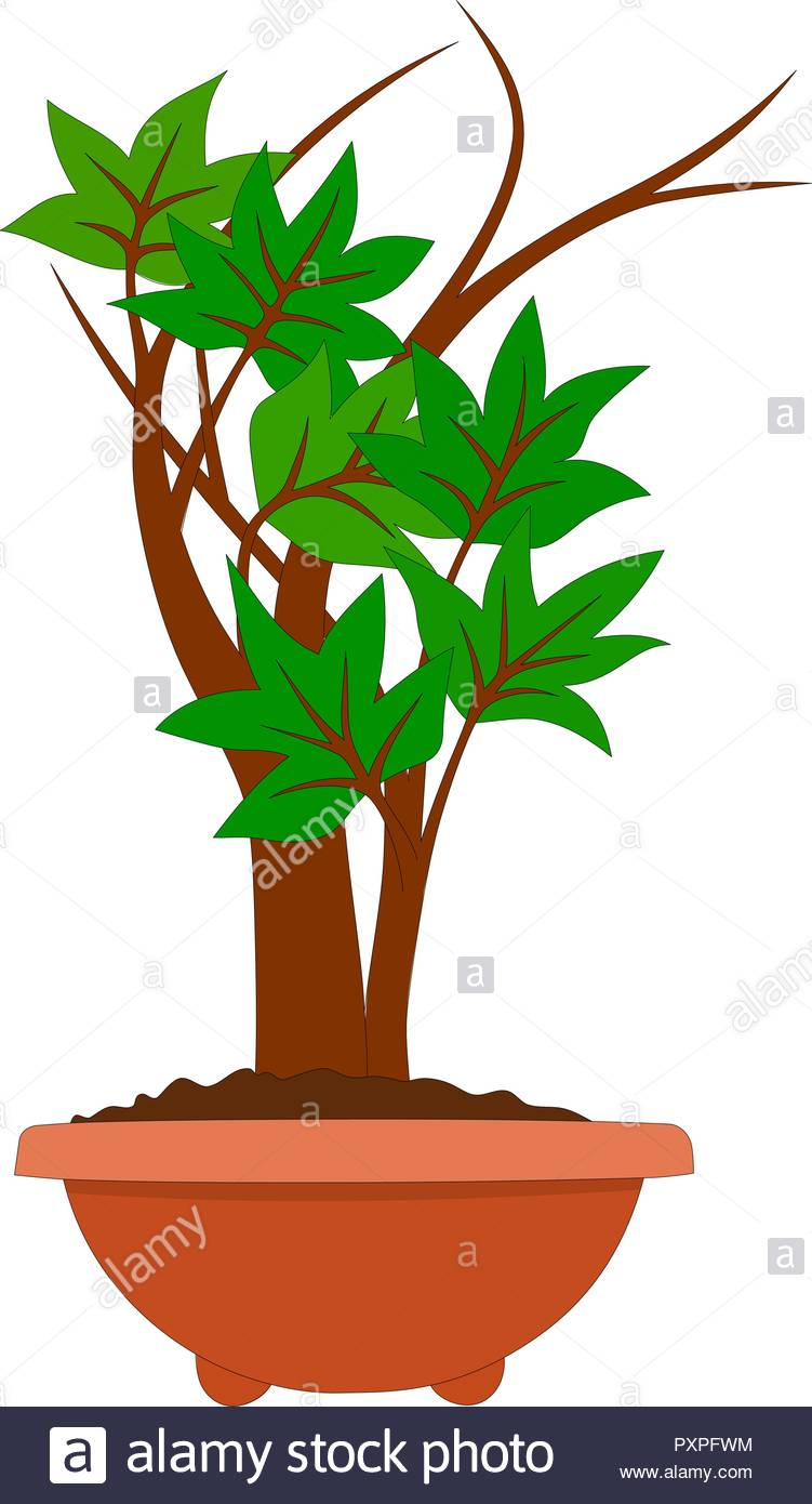 Drawing Of A Young Bonsai Tree Vector Illustration Stock Vector Image Art Alamy