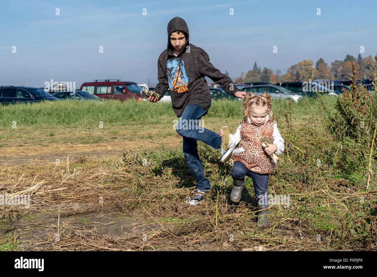 Teenage boy trying to corral his 23 month old sister, with both tripping over the vines in the pumpkin patch. - Stock Image