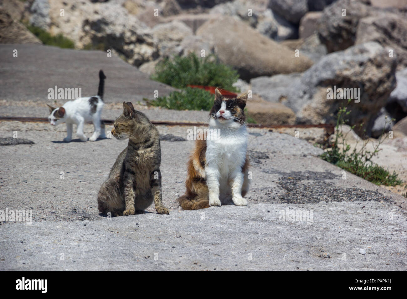 Wind of Change Rhodes Greece Guard Cats on Rock - Stock Image