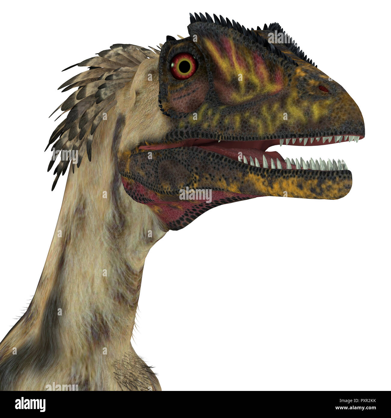 Deinonychus Dinosaur Head - Deinonychus was a carnivorous theropod dinosaur that lived in North America during the Cretaceous Period. - Stock Image