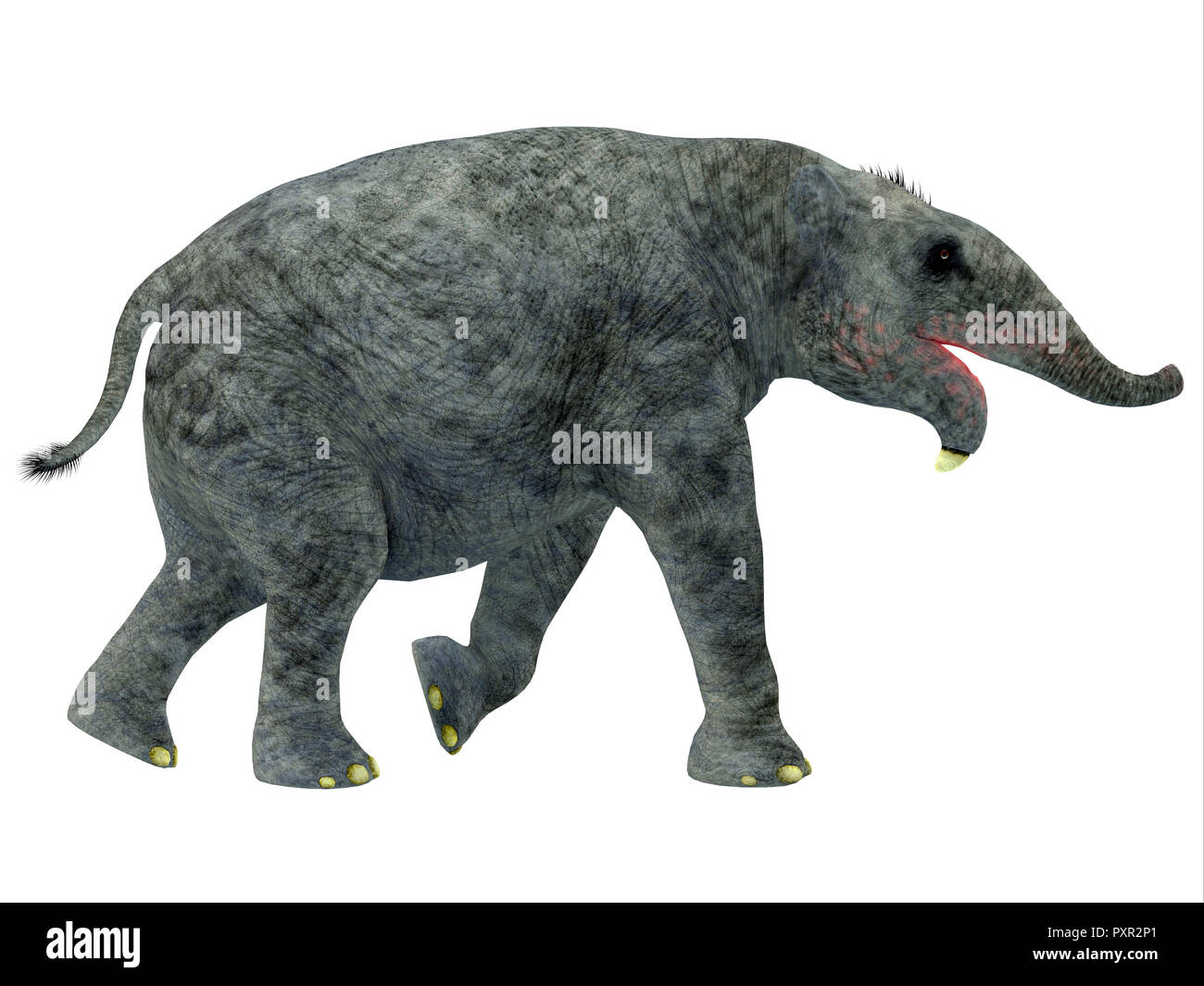 Deinotherium Young Mammal - Deinotherium was an elephant mammal that lived in Asia, Africa and Europe during the Miocene and Pleistocene Period. - Stock Image