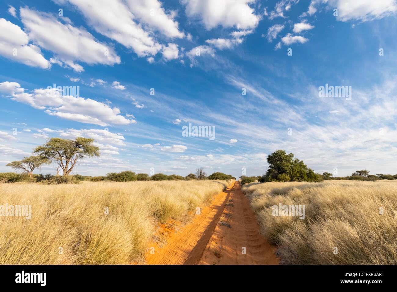 Africa, Botswana, Kgalagadi Transfrontier Park, Mabuasehube Game Reserve, empty sand track - Stock Image