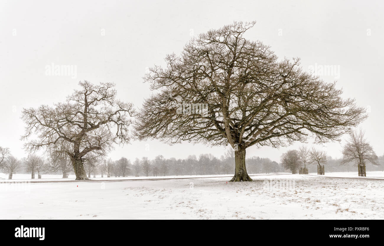 UK, snow-covered winter landscape with bare trees - Stock Image