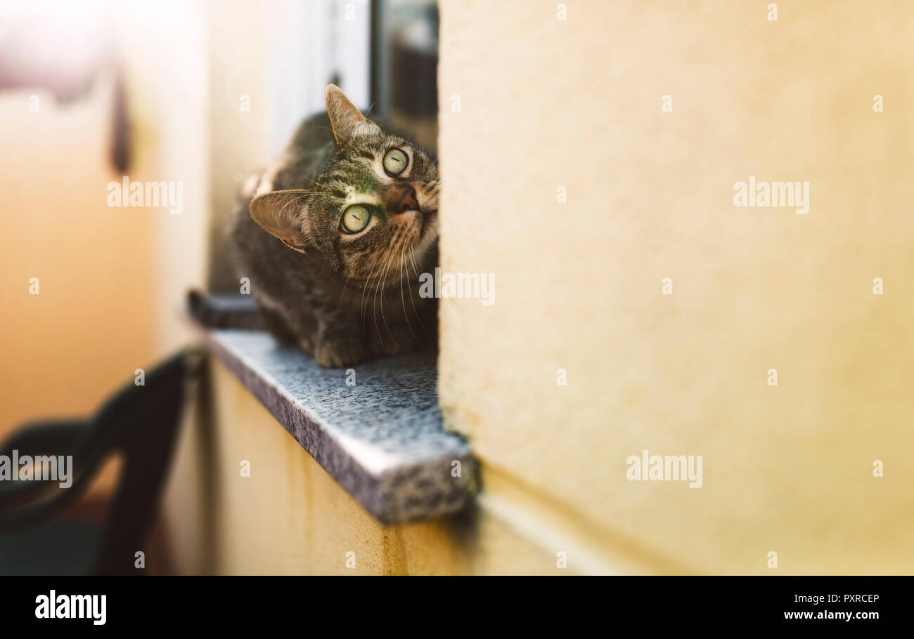 Tabby cat looking up, sitting on window sill - Stock Image