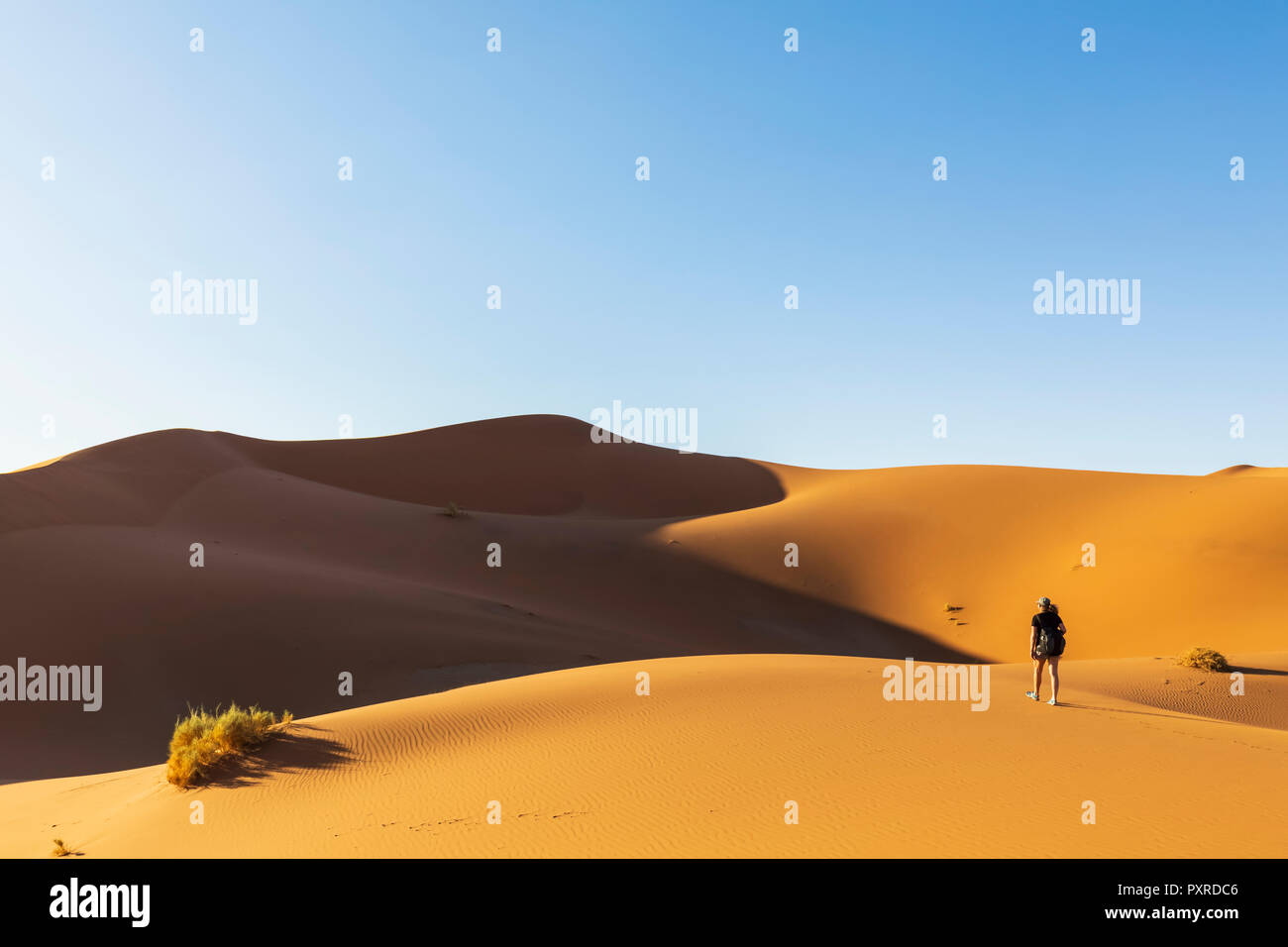 Africa, Namibia, Namib desert, Naukluft National Park, female tourist walking on dune - Stock Image