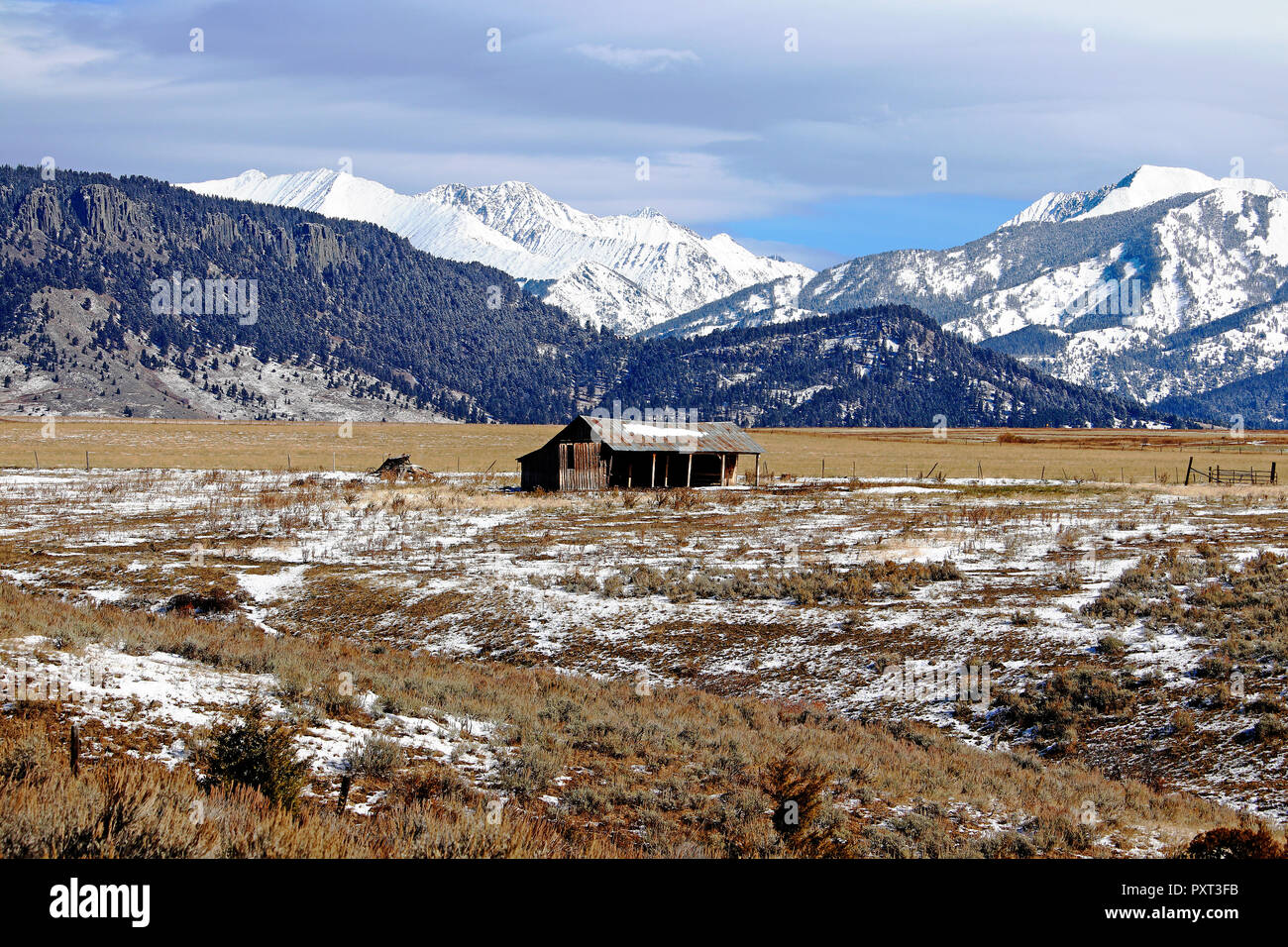 This old barn in Wilsall Montana sits in the shadows of the Crazy Mountains - Stock Image