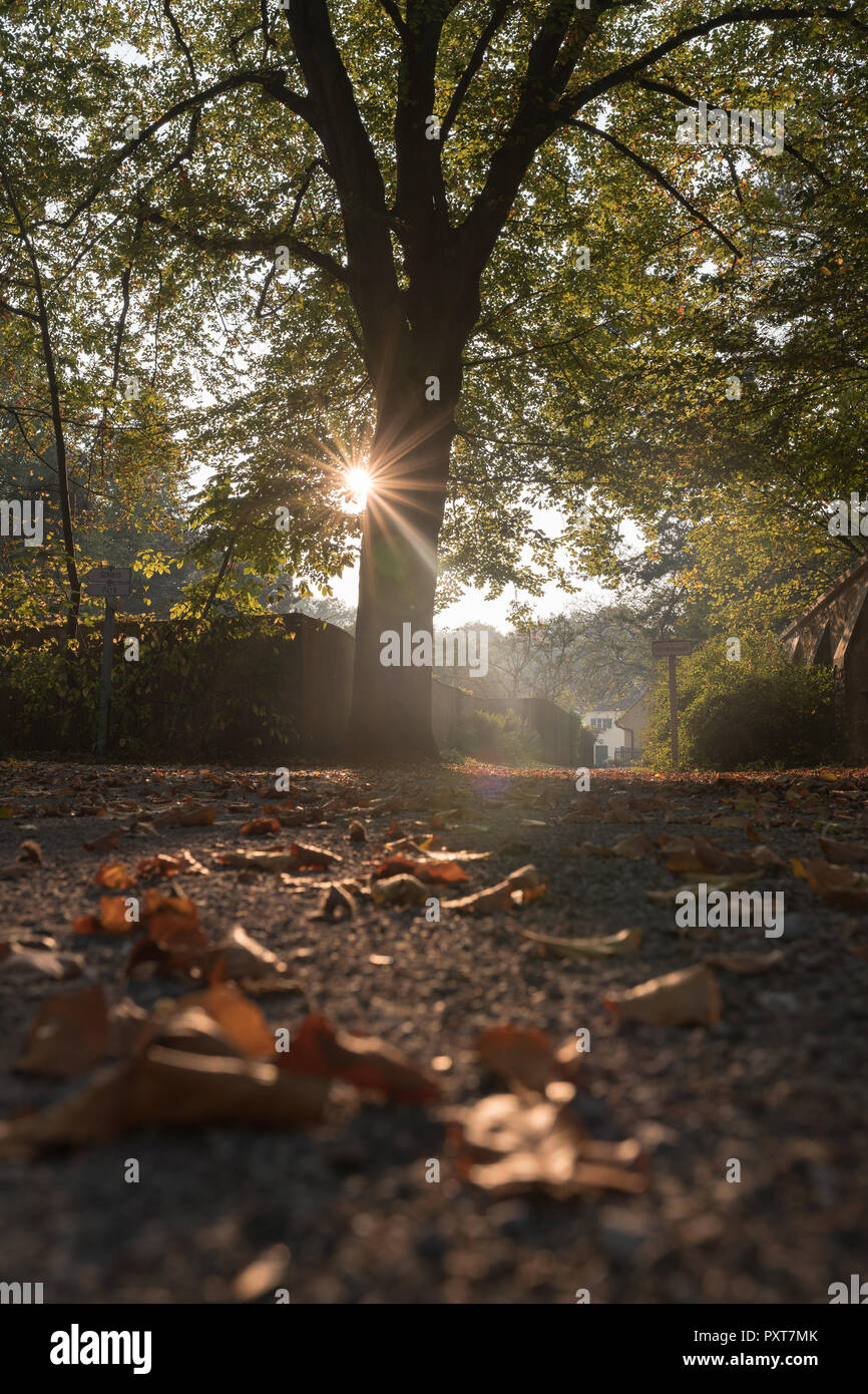 Yellow, orange and red autumn leaves in beautiful fall park against the sunlight. - Stock Image