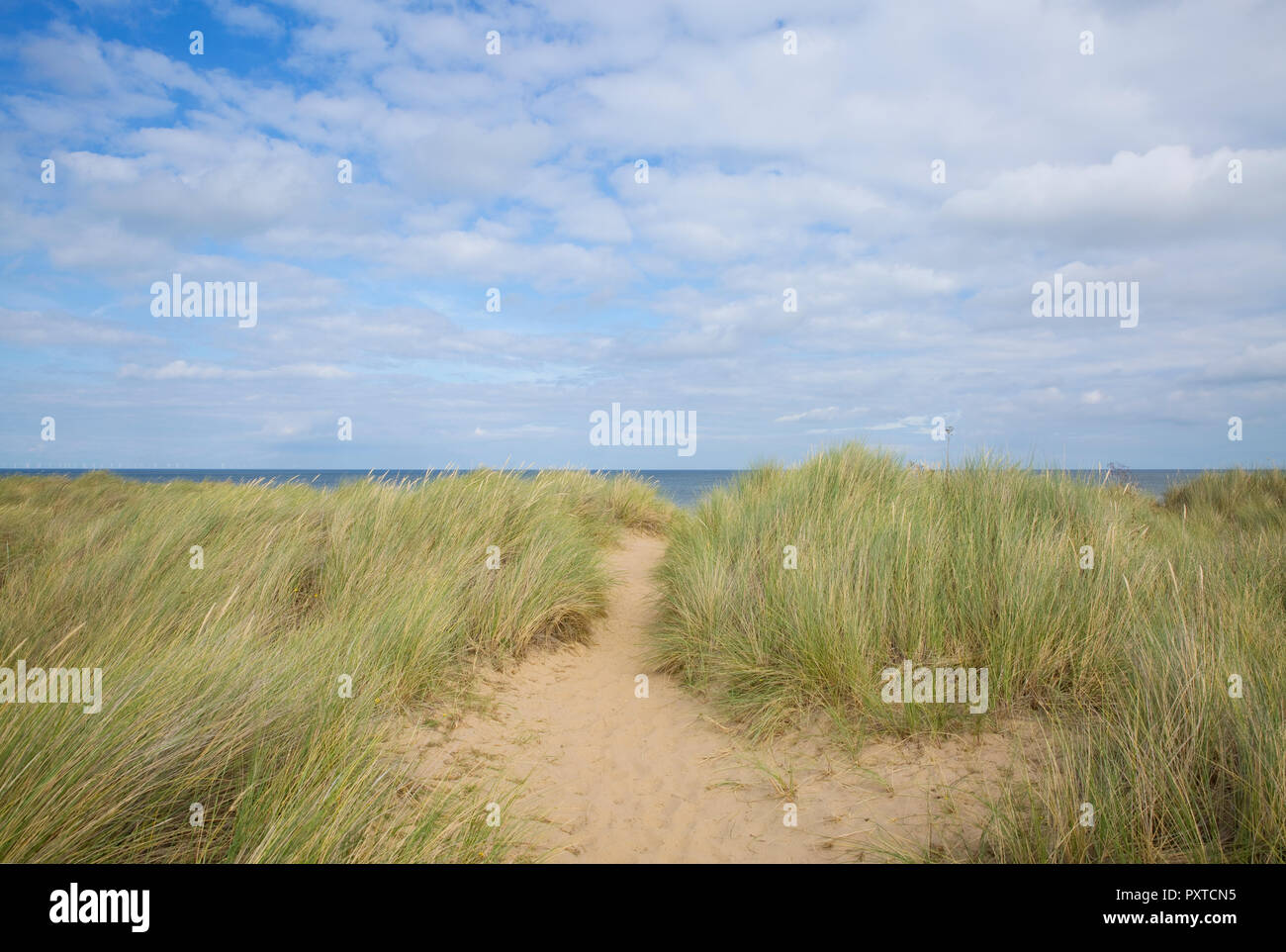Walking in the sand dunes at Thornham, Norfolk, England - Stock Image
