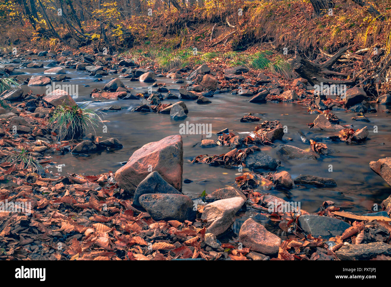 Autumn in the Russian forest. Far Eastern mountain river. - Stock Image