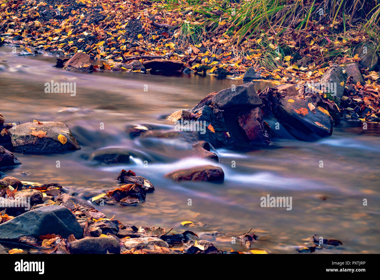 Autumn in the Russian forest. Far Eastern river. - Stock Image