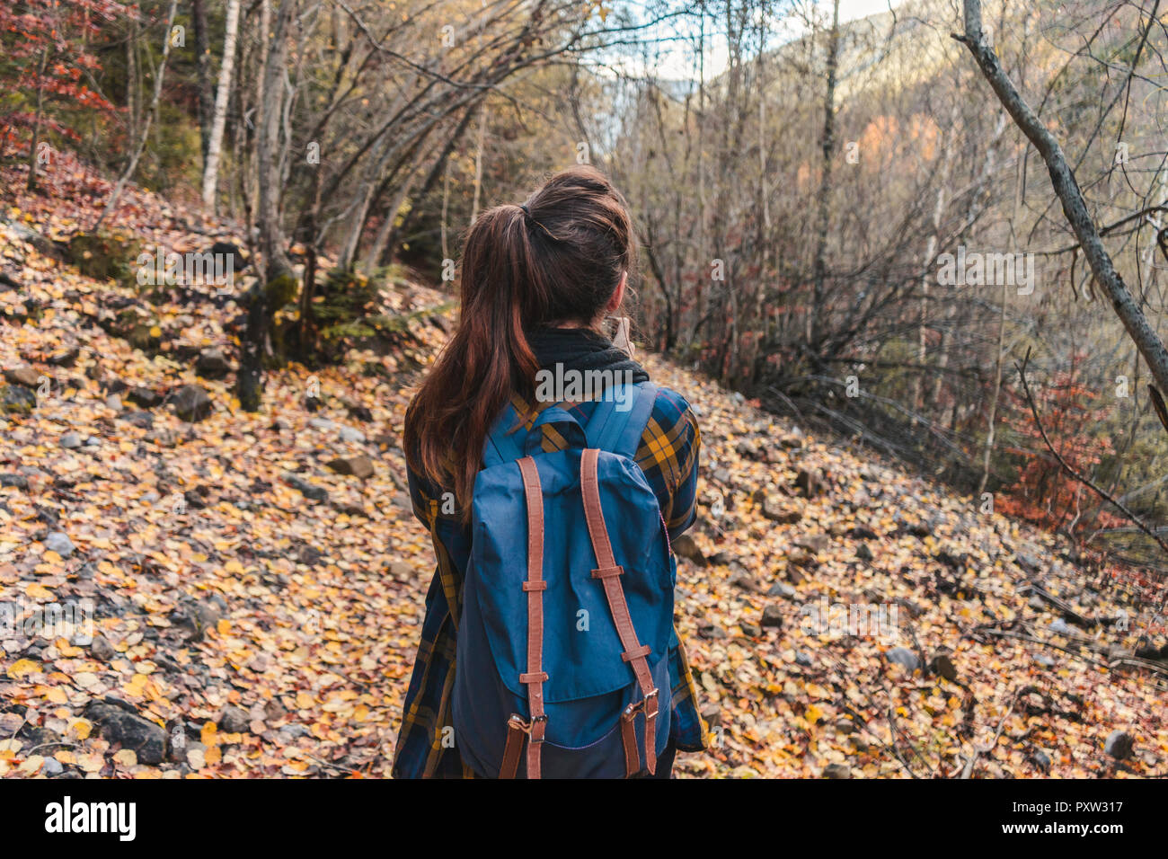 Spain, Ordesa y Monte Perdido National Park, back view of woman with backpack in autumnal forest - Stock Image