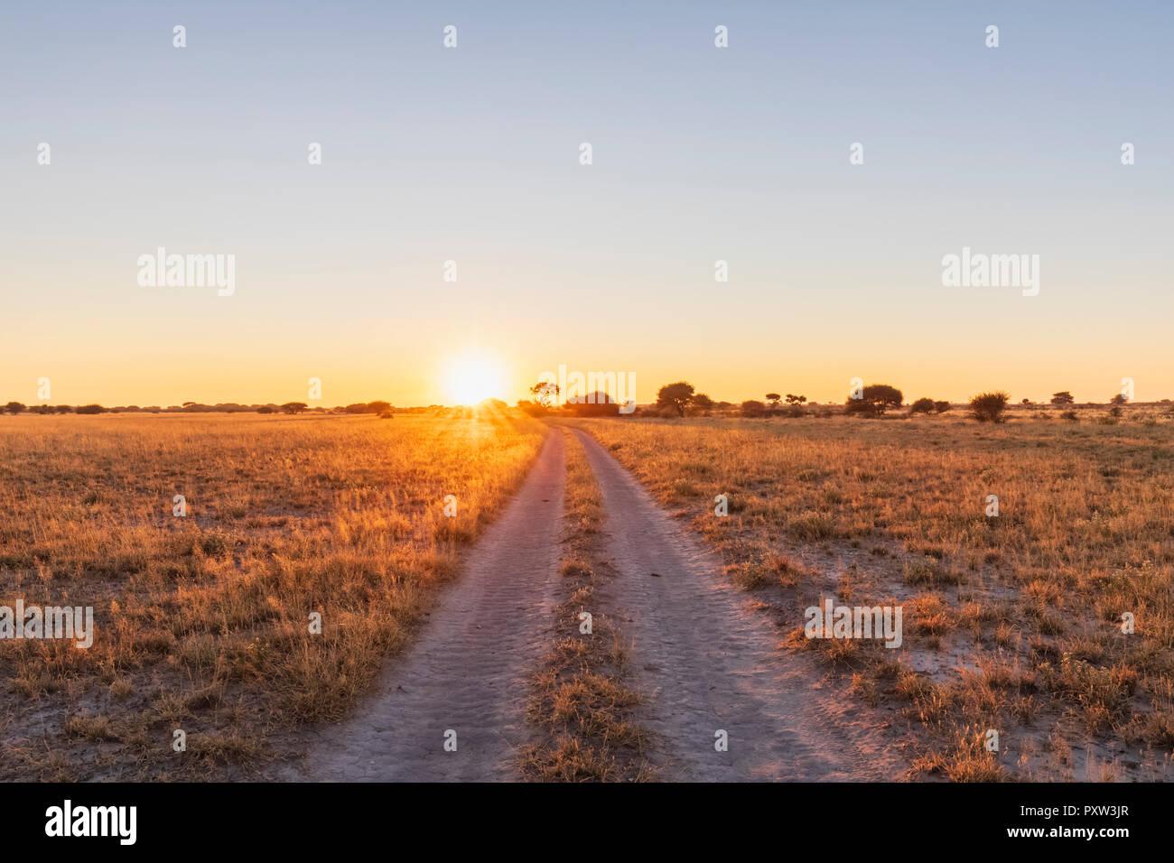 Botswana, Kalahari, Central Kalahari Game Reserve, piste at sunrise - Stock Image