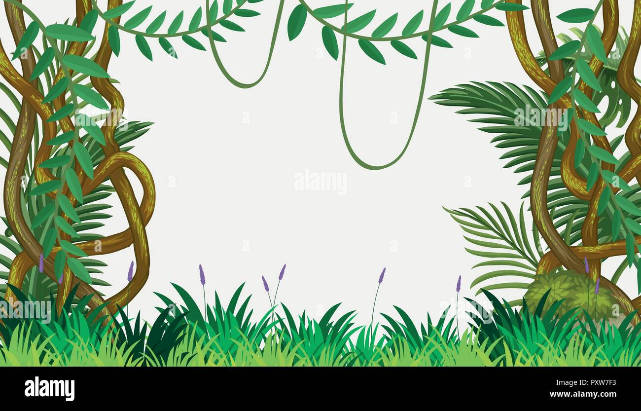 a jungle template with vine illustration stock vector art