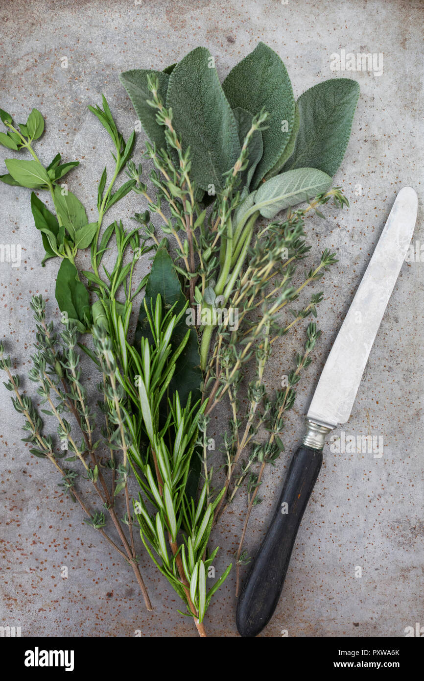 Fresh Provencal herbs and a knife - Stock Image