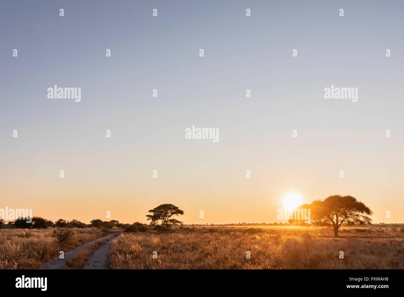 Africa, Botswana, Central Kalahari Game Reserve, sand track at sunrise Stock Photo