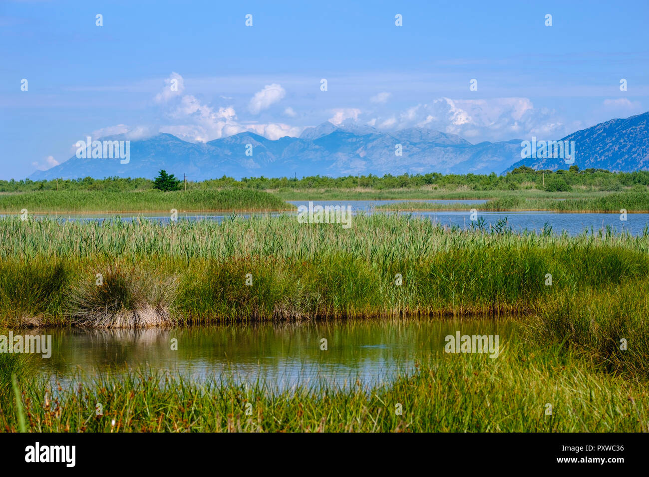 Albania, Lezhe, Lagune, Kune-Vain-Tale Nature Park - Stock Image