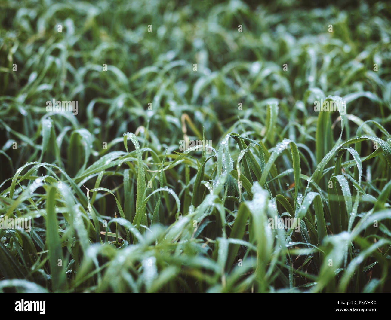 Meadow with dewdrops - Stock Image