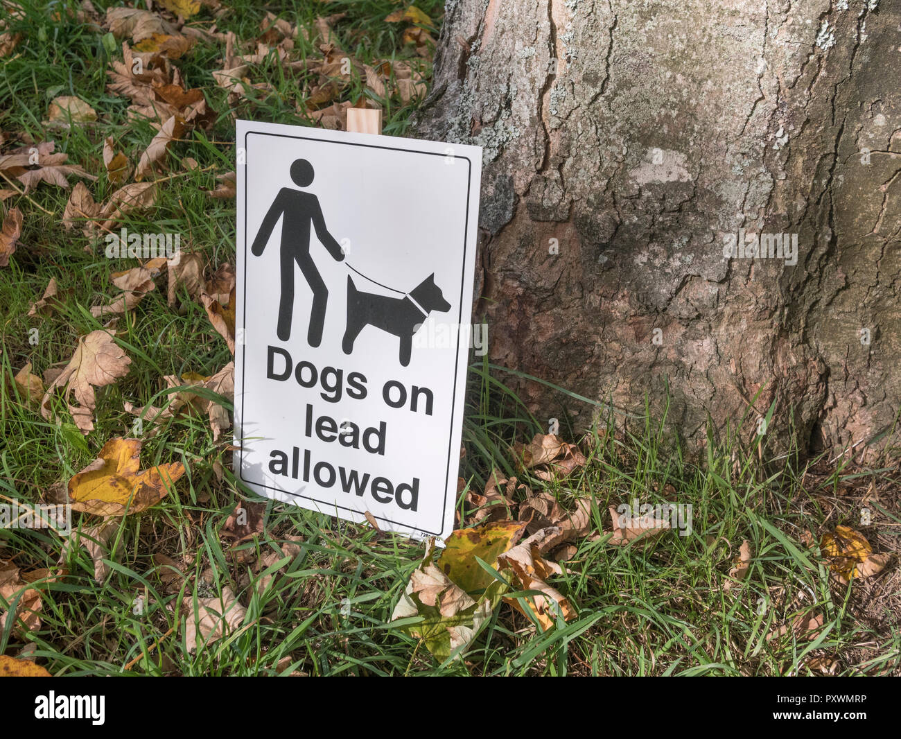Sign asking responsible dog owners to keep their pets on a lead. - Stock Image