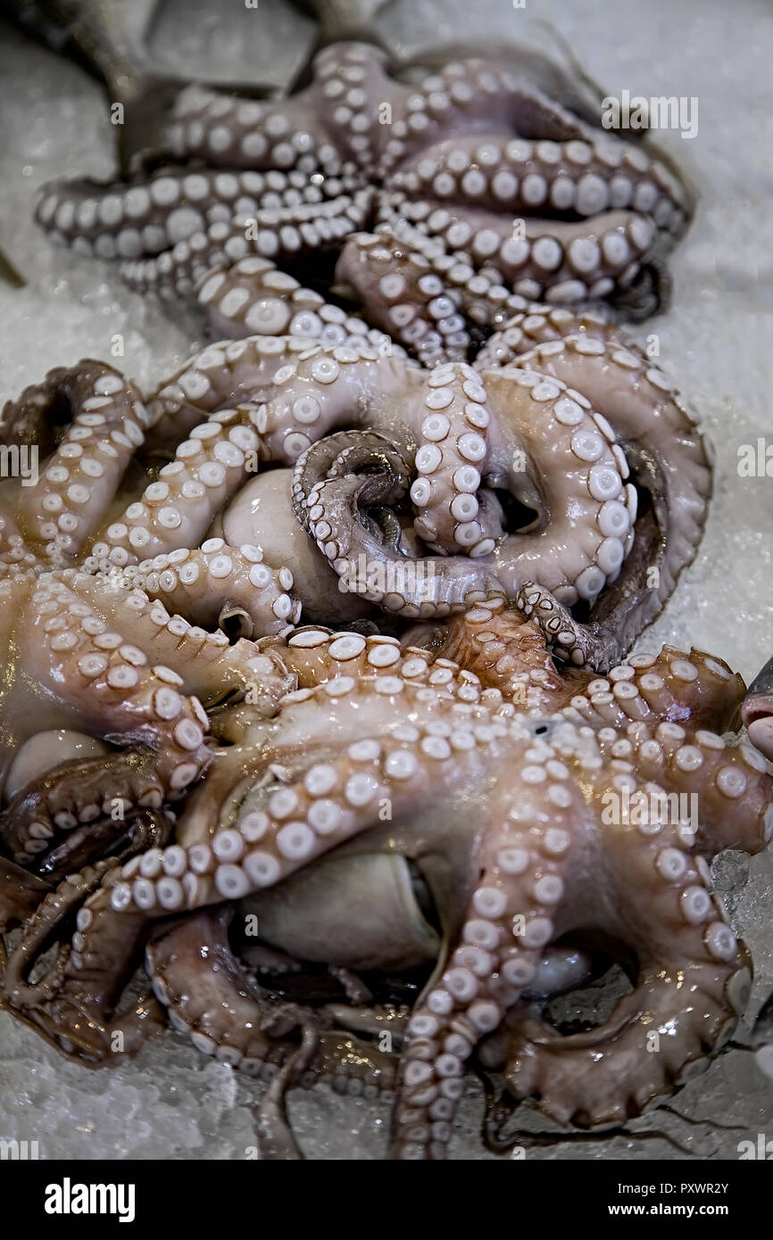 . Octopuses.  Day catch  display of octopi laid on ice at the fishmongers.  Closeup. - Stock Image