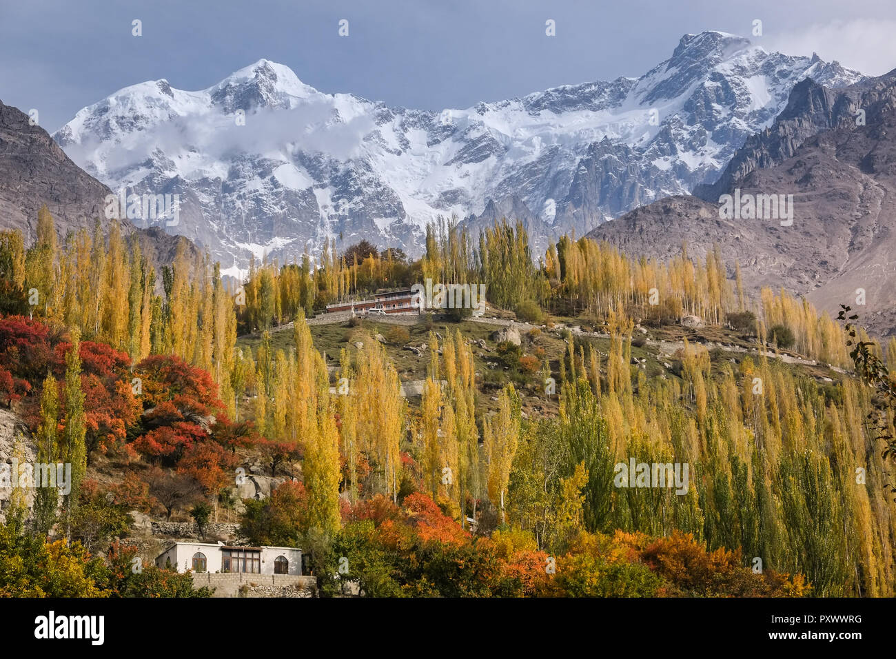 Autumn scene in Karimabad show colorful leaves and trees with snow capped mountains behind, Hunza valley, Gilgit-Baltistan, Pakistan. - Stock Image