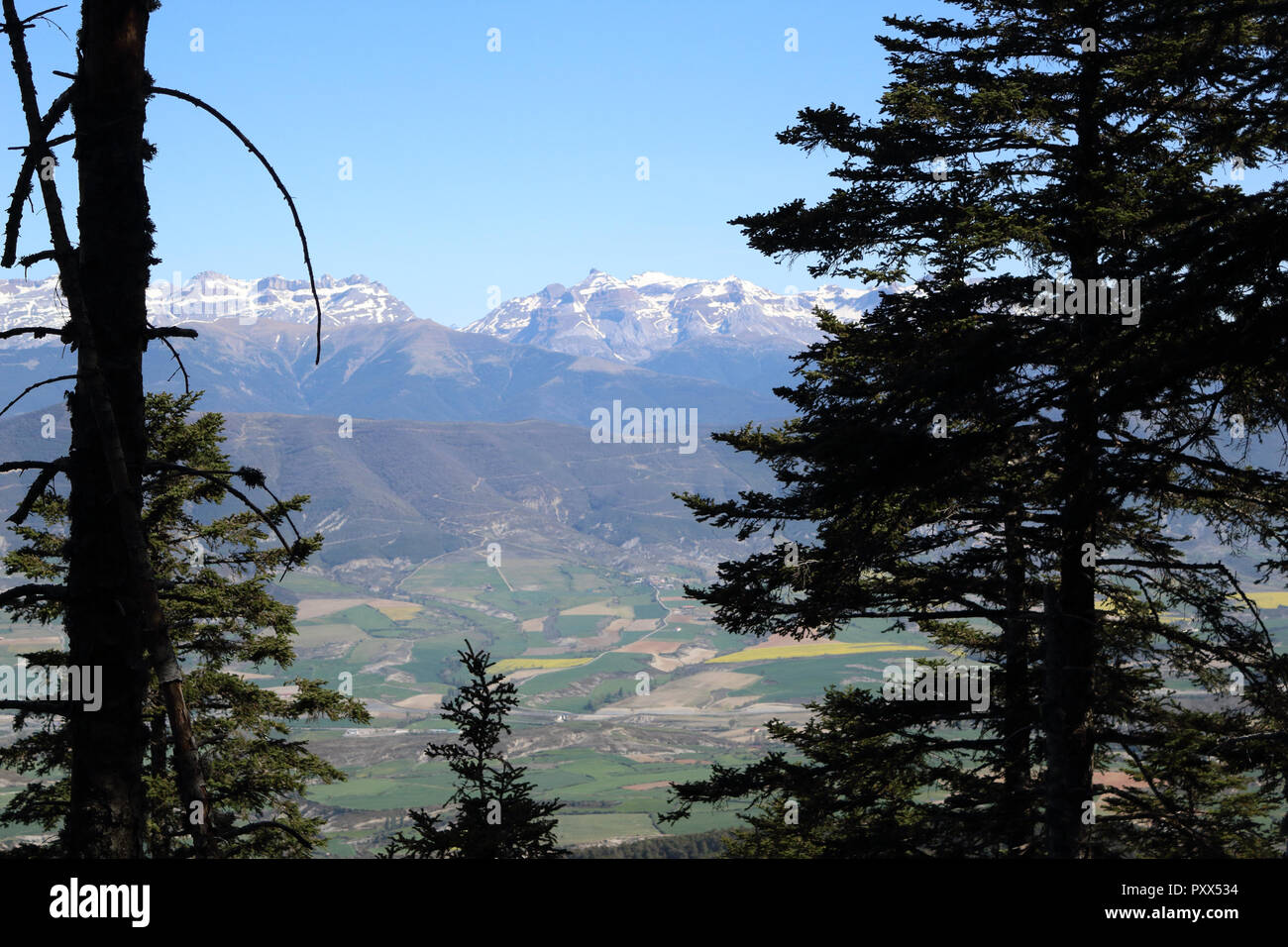 Fir and pine trees on the Peña Oroel mount, with the snow-clad Pyrenees as background, a wide valley with blue sky and some bushes, in Aragon, Spain - Stock Image