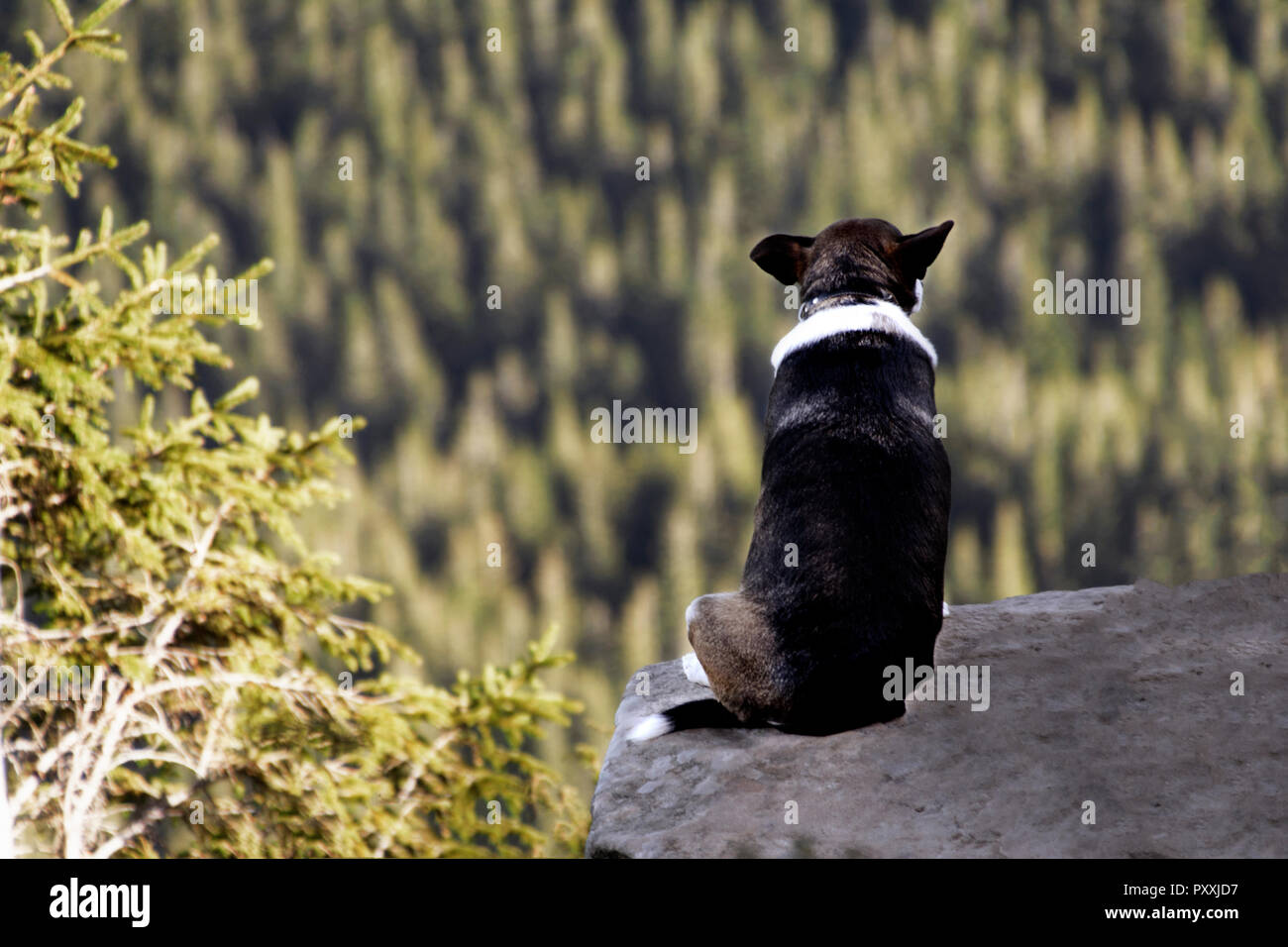 Alone dog sitting on rock against the backdrop of an incredible mountain landscape - Stock Image