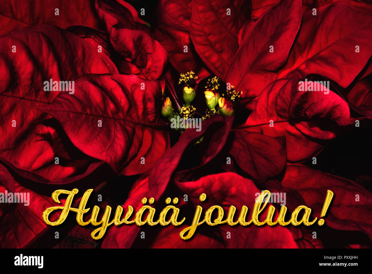 The Finnish Text Hyv Joulua Means Merry Christmas Which Is In