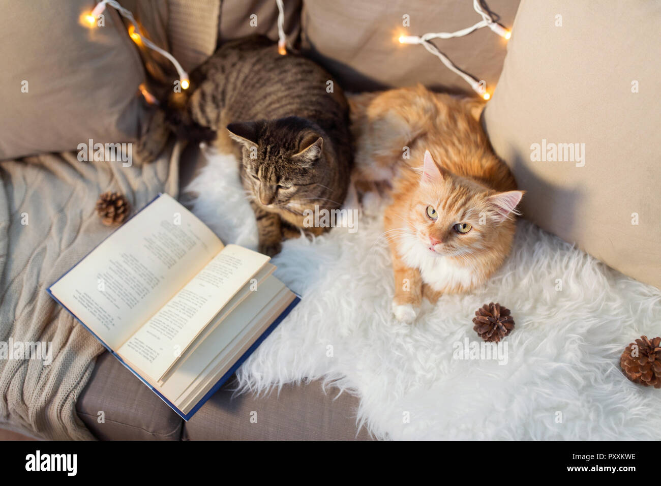 two cats lying on sofa with book at home - Stock Image