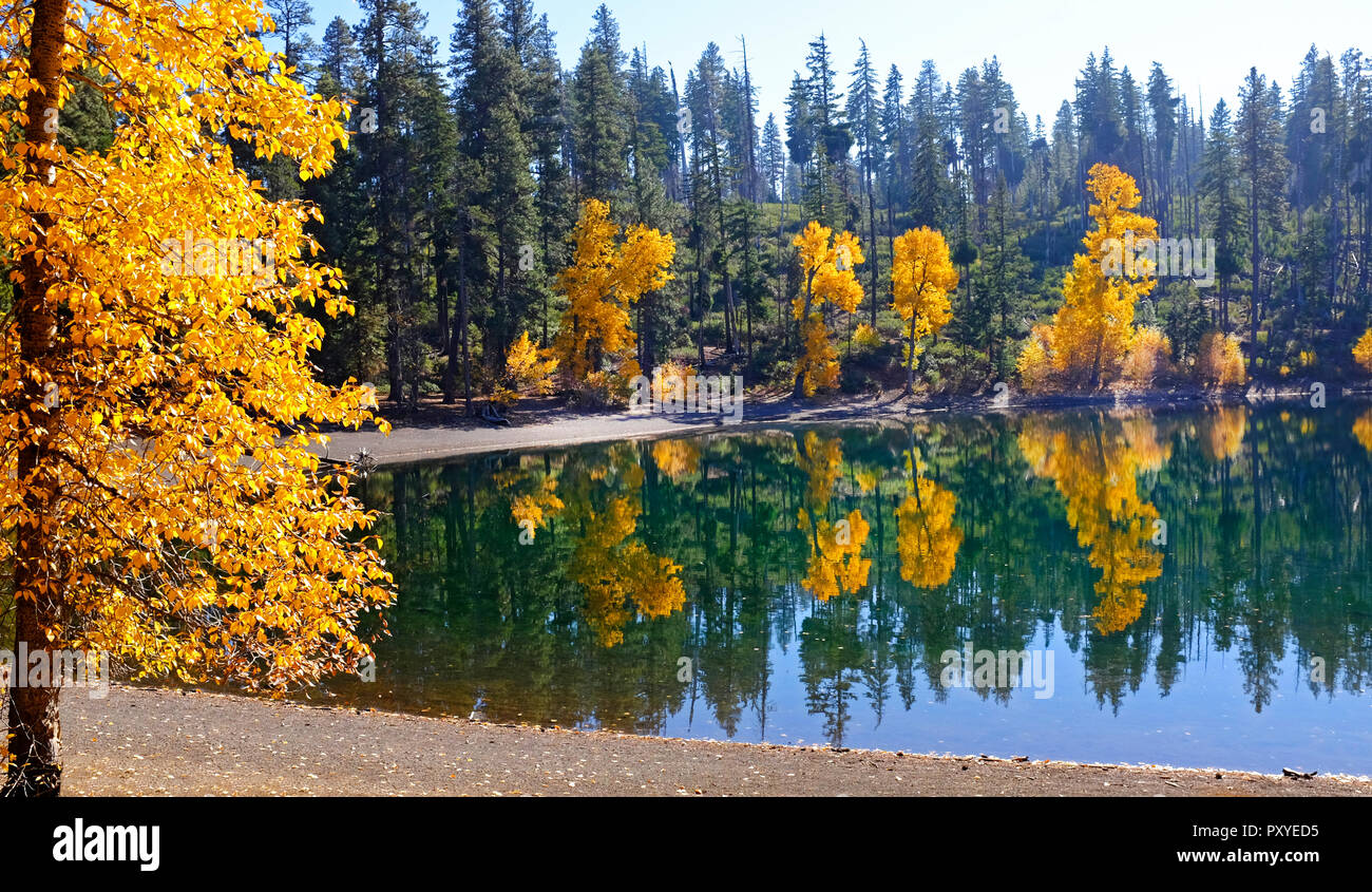 Willows and beech trees turn gold along the shore of Scout Lake on the eastern slope of the Cascade Mountains in Central Oregon in mid October. - Stock Image