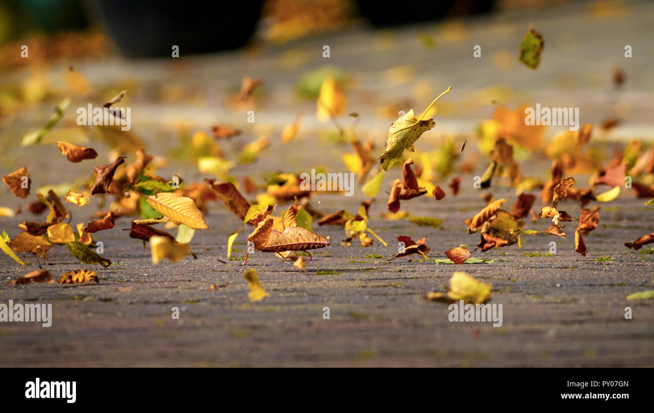Autumn Leaves Blowing In The Wind Uk Stock Photo Alamy