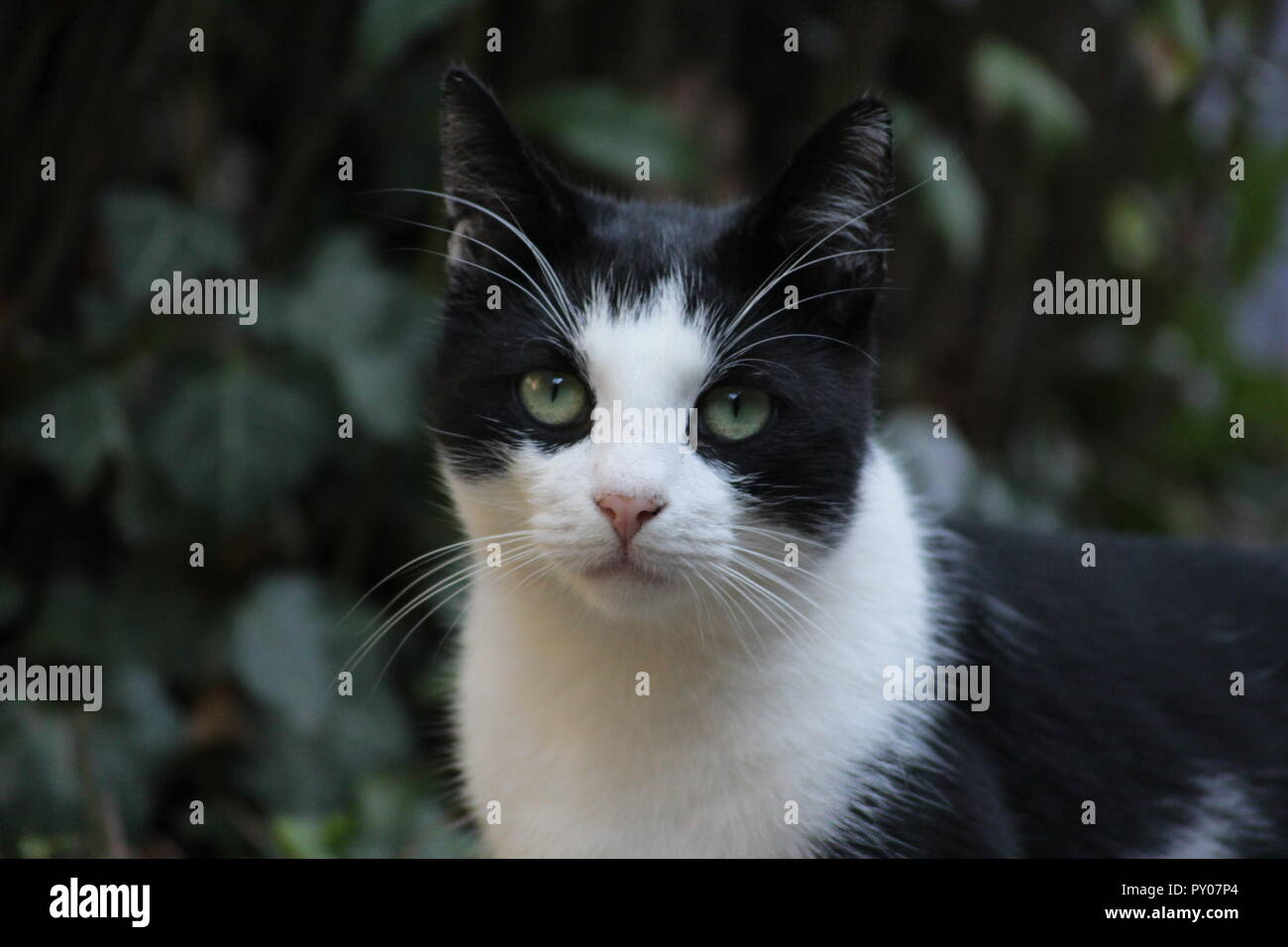 Cat in the garden - Stock Image