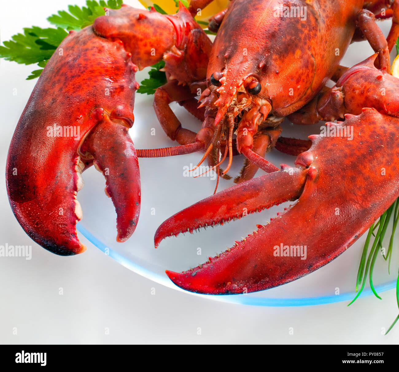 Cooked red whole lobster with big claws - Stock Image