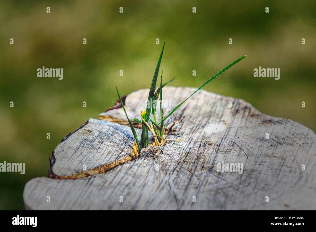 Nature fights back - Stock Image