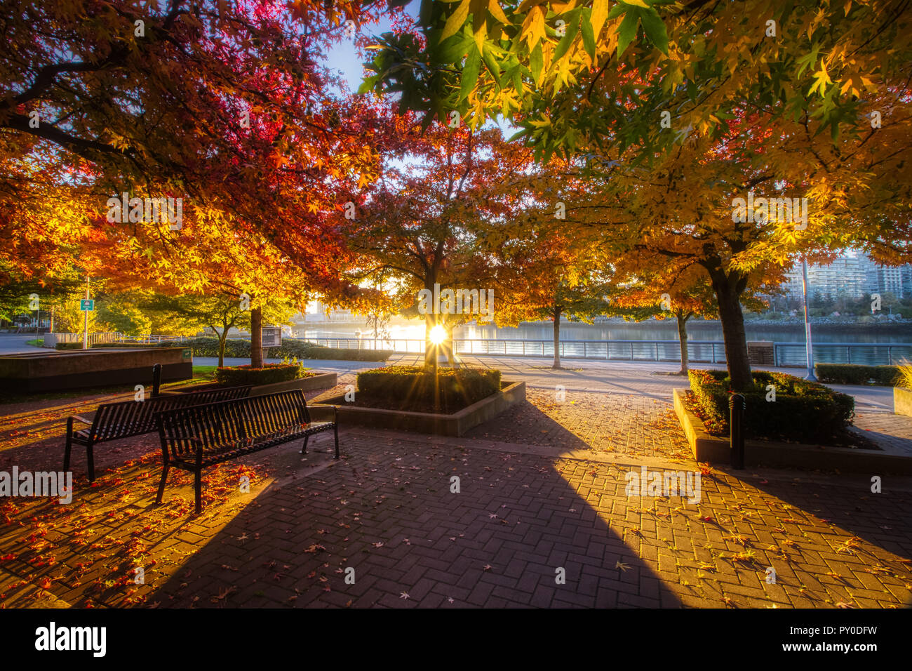 Stunning canopy of colorful trees in autumn at sunrise with long shadows cast across the ground & False Canopy Stock Photos u0026 False Canopy Stock Images - Alamy