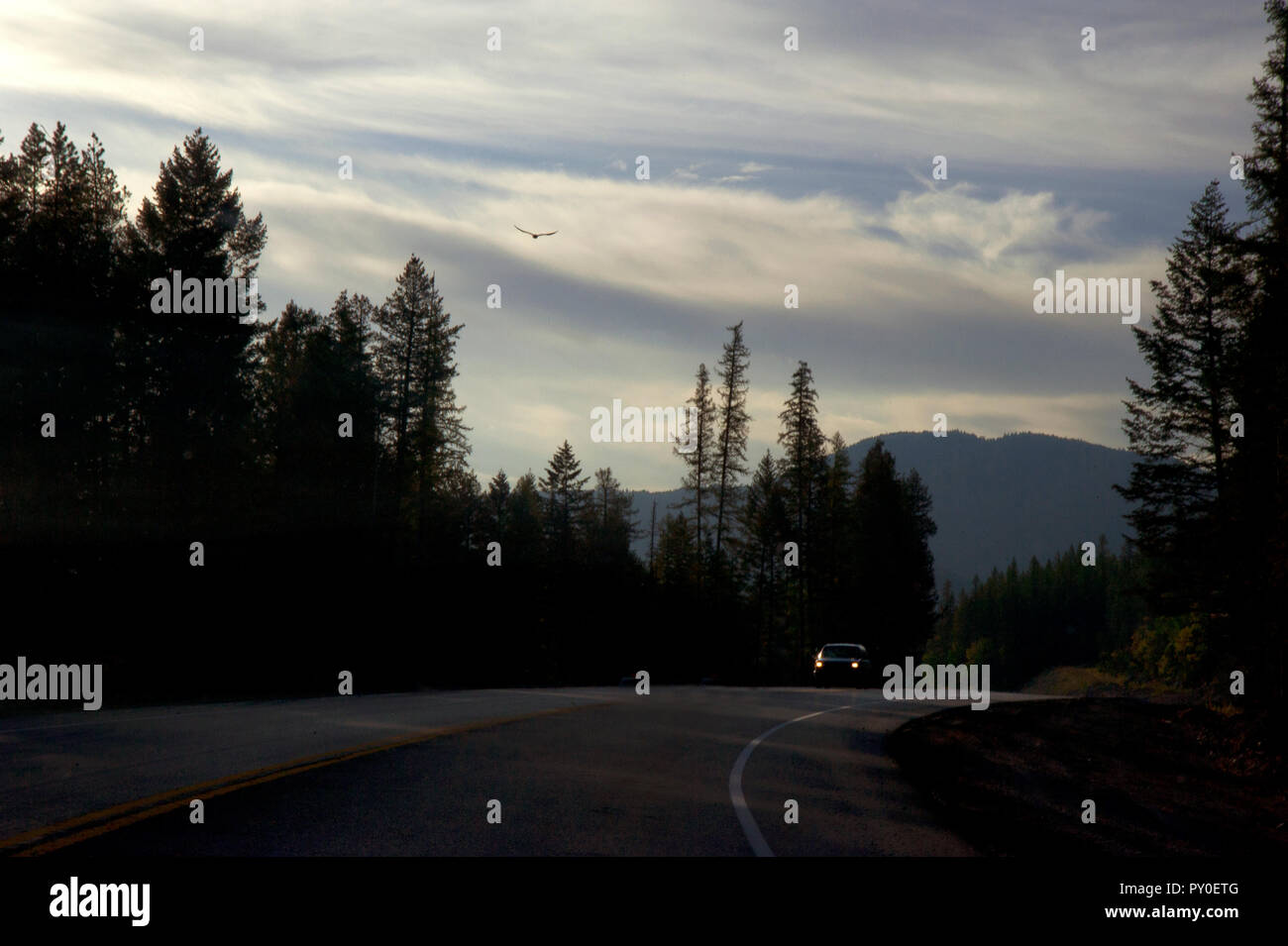 Car driving on open highway with large bird soaring overhead in Montana, USA - Stock Image