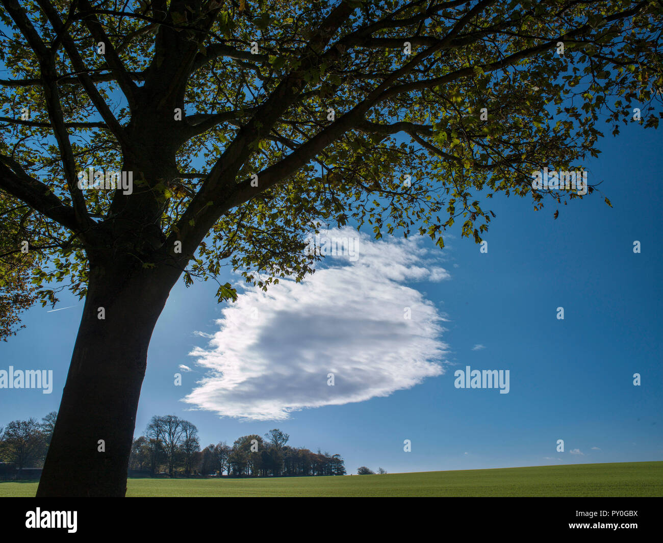 Tree and dramatic cloud against blue sky, wentworth, south yorkshire, england - Stock Image