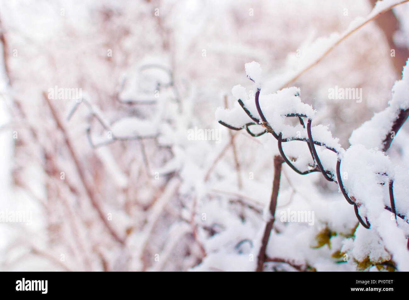 Closeup of a crooked piece of mesh fence covered in a thick layer of white fresh fluffy snow against a blurred orange background with branches. Cold w - Stock Image