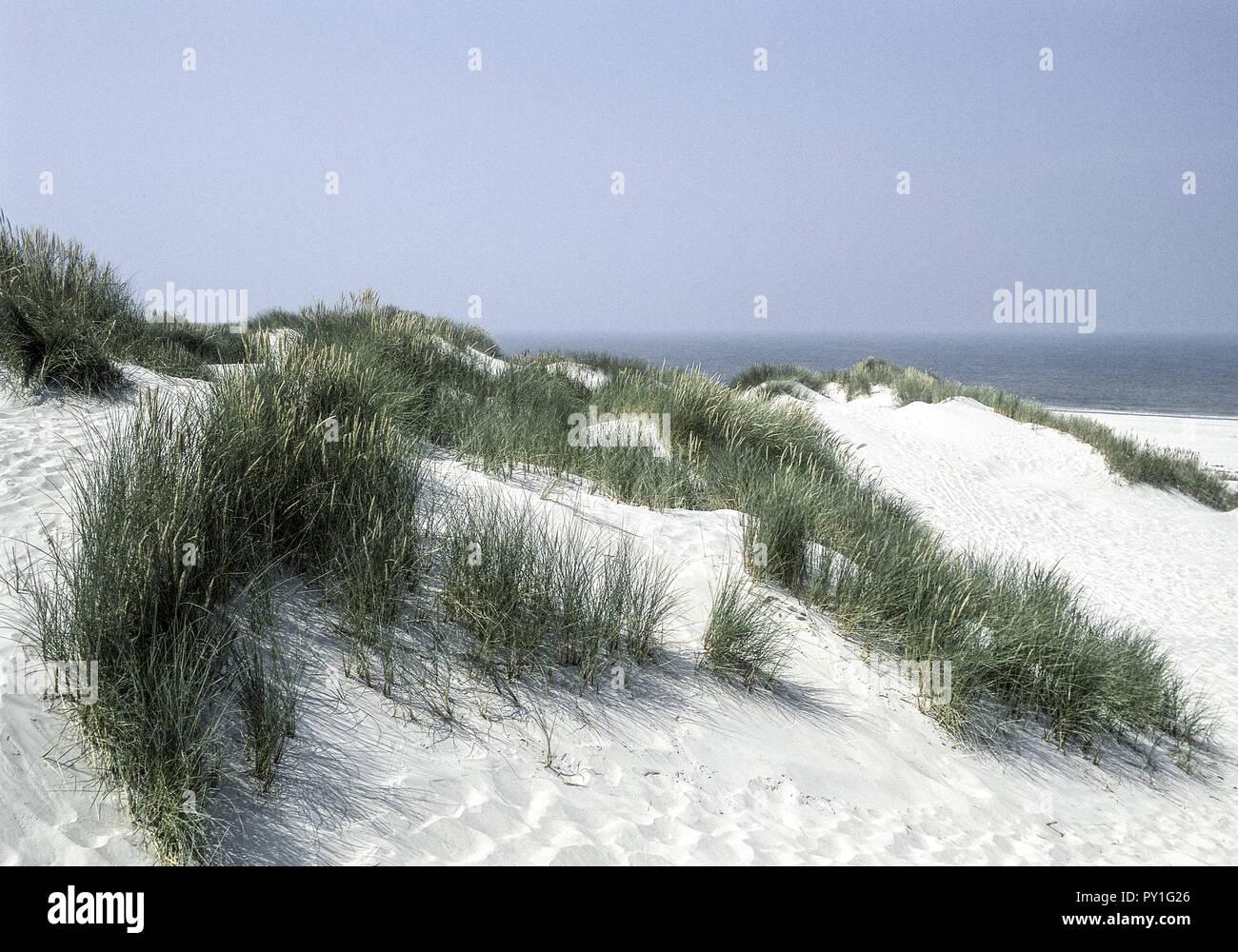 Duenen, Insel Baltrum, Ostfriesland, Niedersachsen, Deutschland - Stock Image