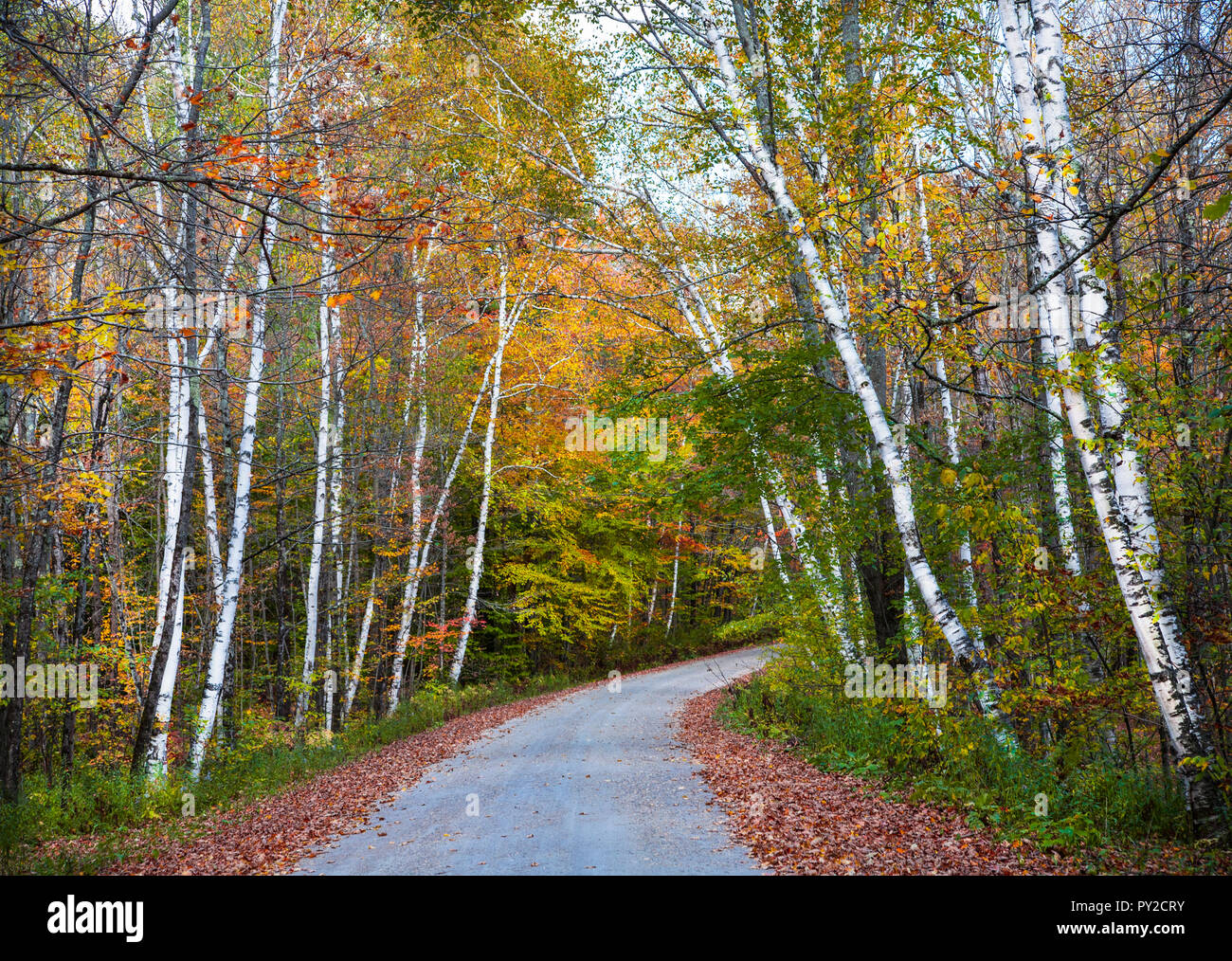 Autumn road in the Green Mountain National Park, Vermont, USa, New England fall - Stock Image