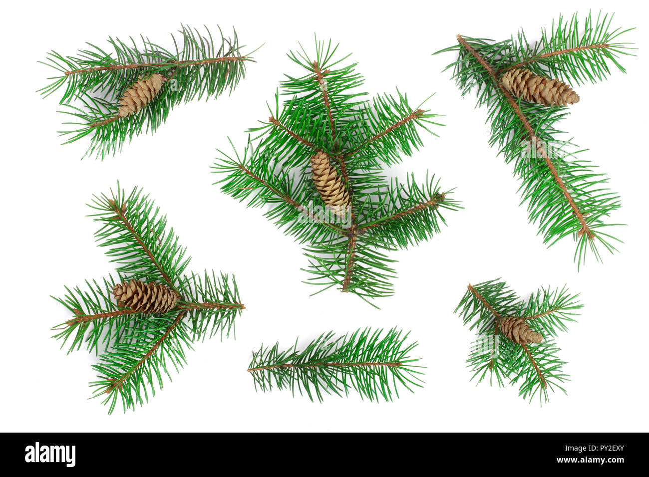 Fir tree branch with cones isolated on white background. Christmas background. Top view. - Stock Image