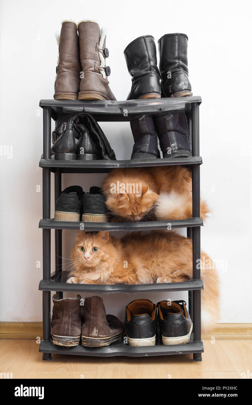 26fa6a33b6d86f Shoe Rack Stock Photos & Shoe Rack Stock Images - Alamy