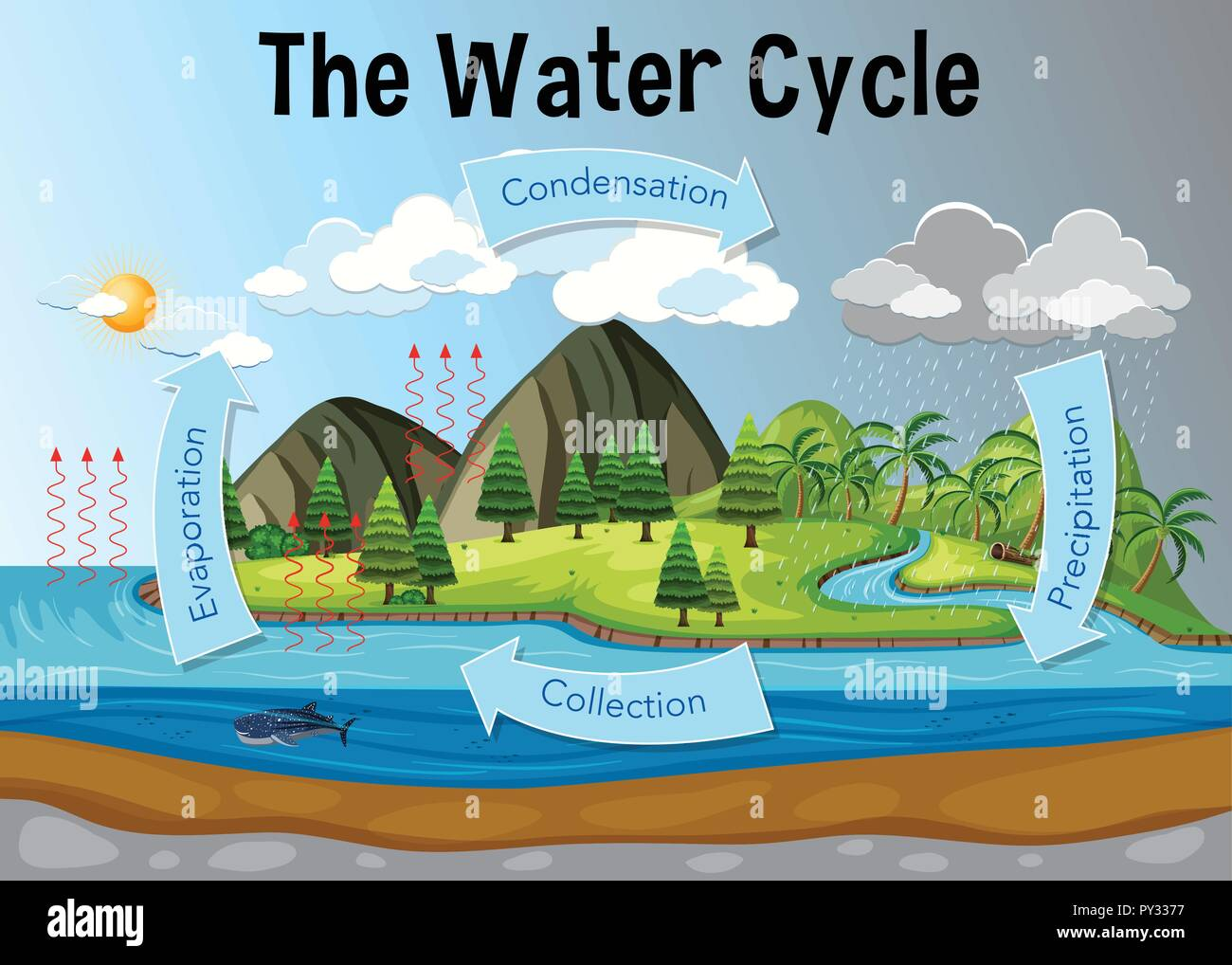 The water cycle diagram illustration stock image