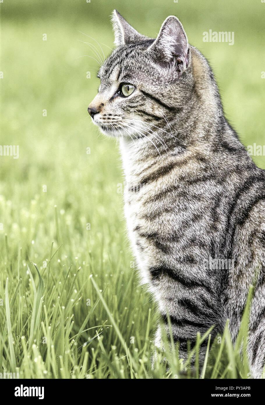 Katze sitzt in Wiese Stock Photo