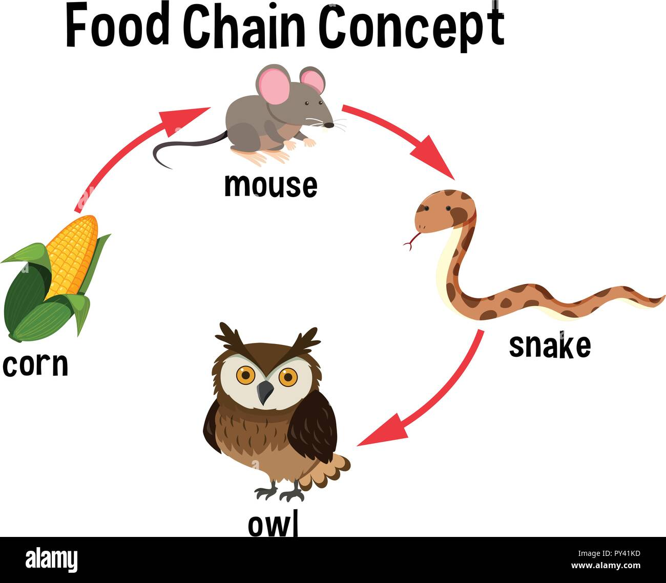 food chain concept diagram illustration stock vector artfood chain concept diagram illustration