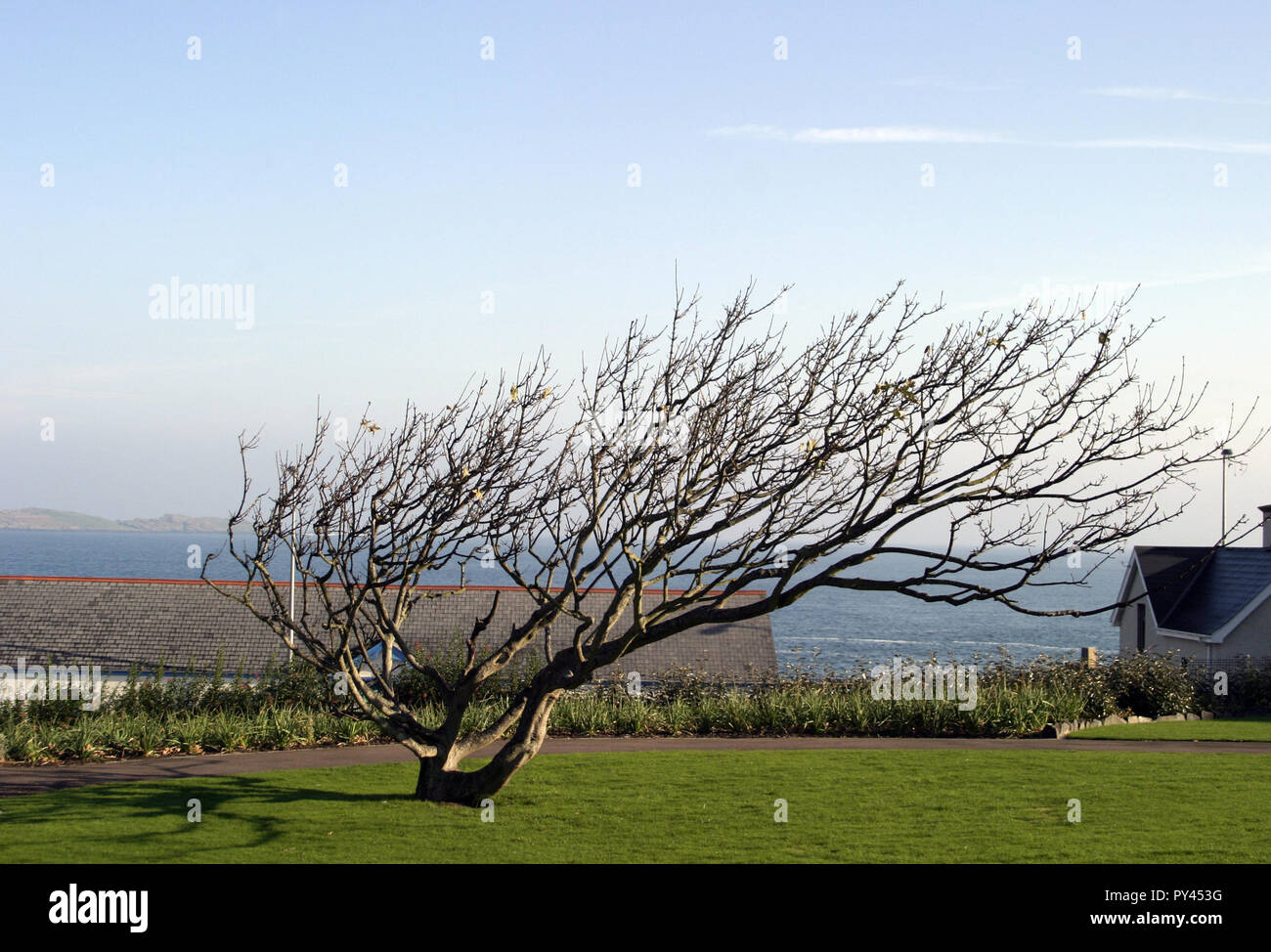 It can be very breezy in the Northern Irish town of Portrush as this tree can testify. - Stock Image