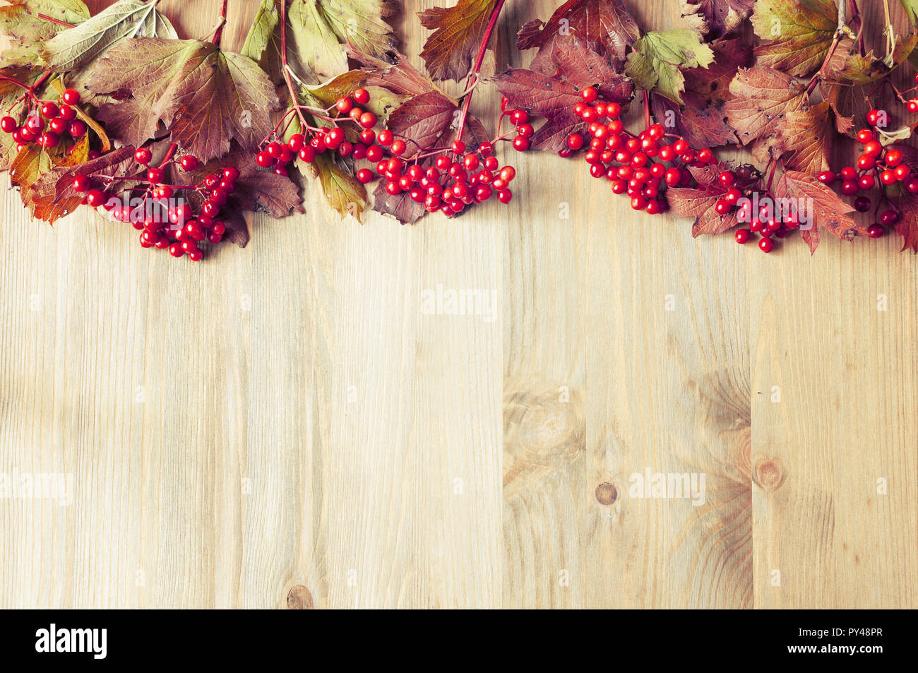 Autumn background with seasonal autumn nature berries of Viburnum opulus or guelder rose on the wooden background - Stock Image