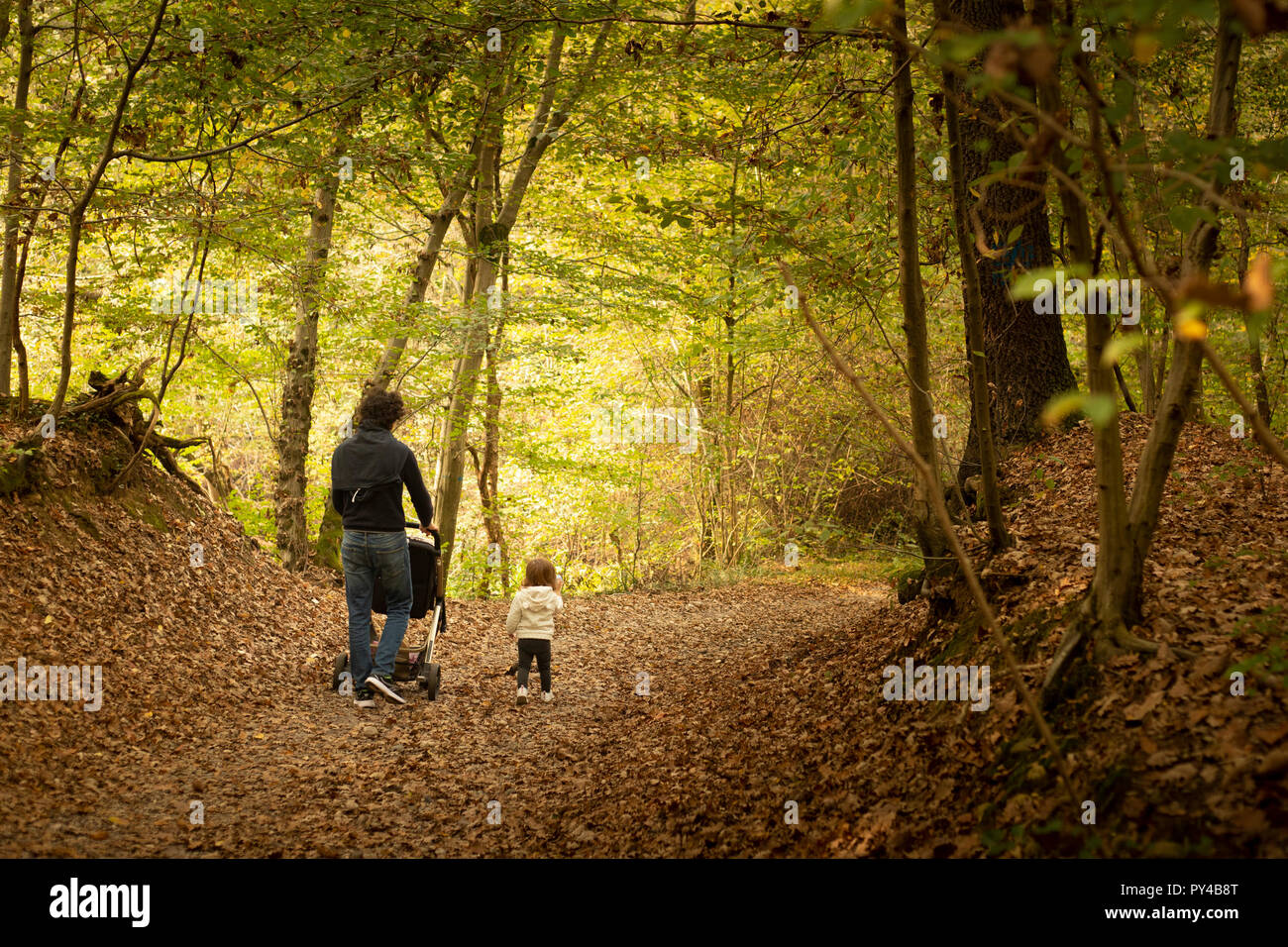 Young dad and toddler baby girl walking together in the woods in autumn with a stroller. Back view, background or wallpaper with copy space.