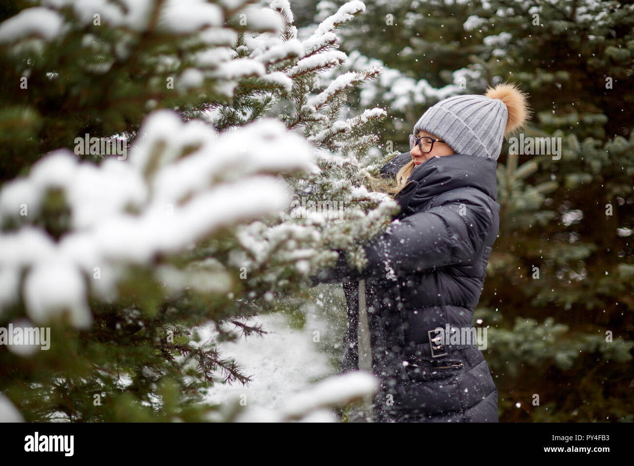 Cheerful woman touching snowy conifer tree - Stock Image