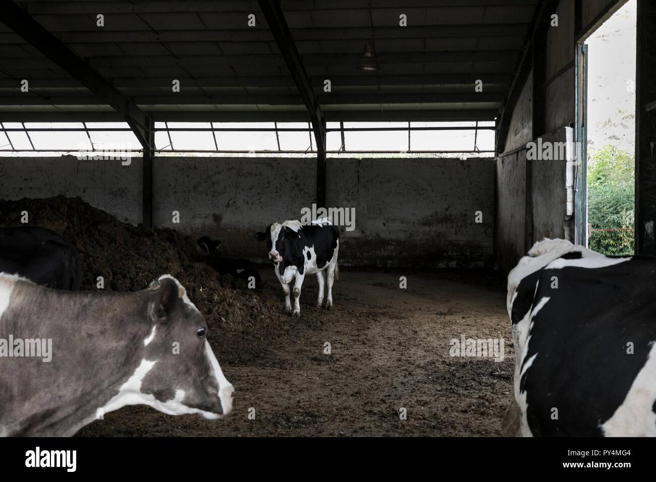 Livestock farming, Greece Stock Photo
