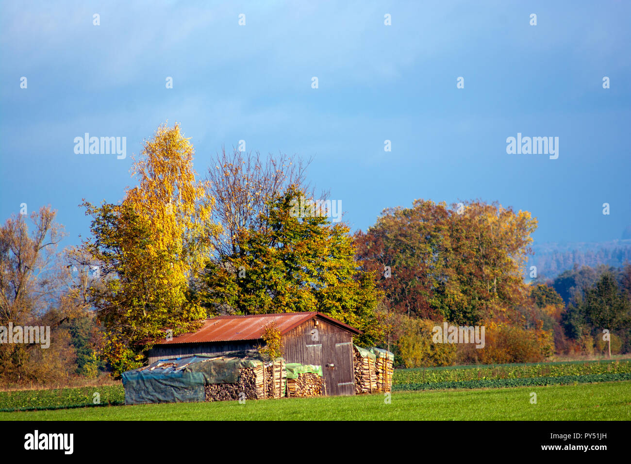 Concept nature : Wood for Winter Stock Photo